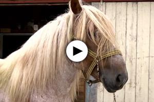 rettet-pferd