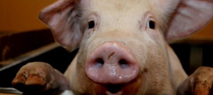 Neu im Catch-up Service: Tiere kochen für Menschen