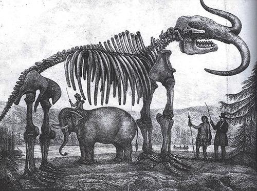 elefant-web1