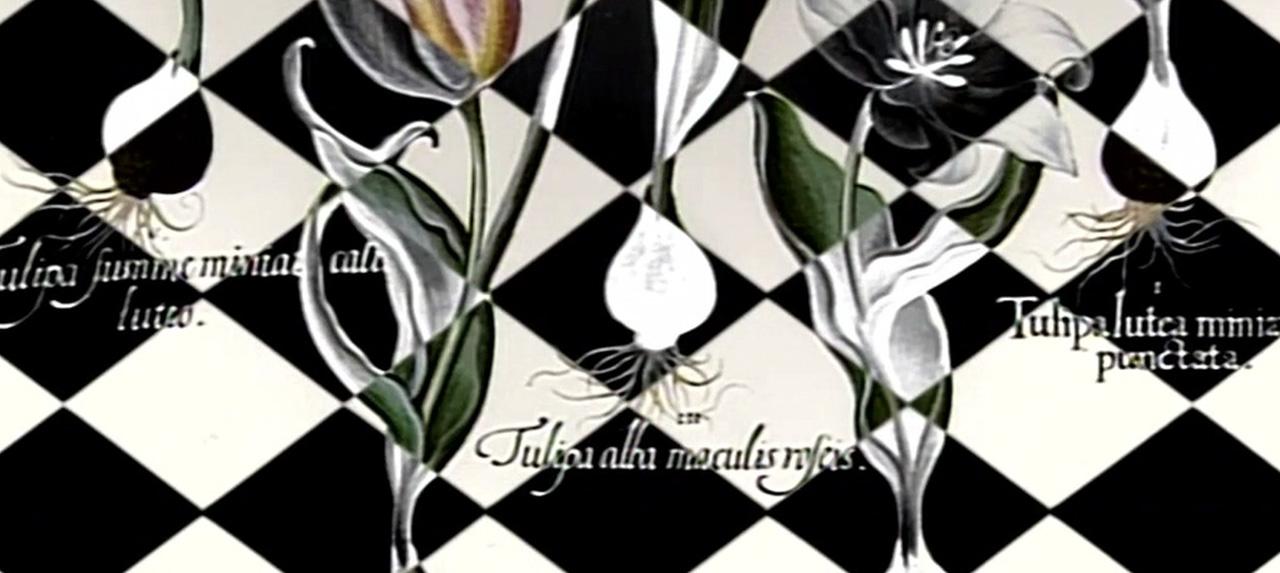 Aus dem Archiv: 30.000 Gulden für eine Tulpenzwiebel